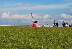 DSC_0255 (matzhuang) Tags: sun grass marinabarrage