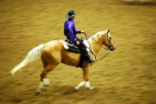 square dance horse