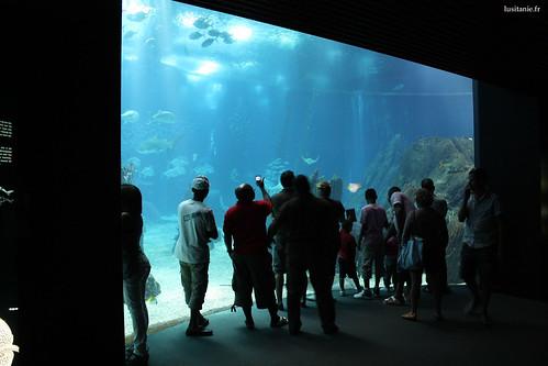 Nous pouvons admirer la vie marine avec les grandes dimensions du bassin