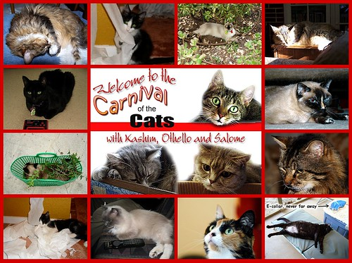 Carnival of the Cats #287