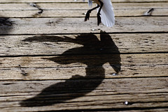 Incoming three o clock (_ThePicture_) Tags: macro bird norway nikon seagull gull sigma 70mm tonsberg d80