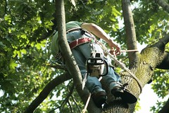 _MG_6364.JPG (zimbablade) Tags: trees sleepyhollow dougmiller videopoem