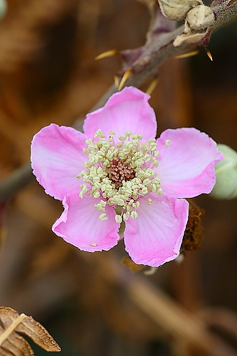 IMAGE: http://farm4.static.flickr.com/3514/3972226442_54ecf0da8e.jpg