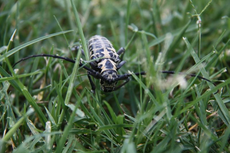 Strange Bug 1