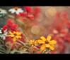 flowers and bokeh (Sabinche) Tags: flower nature bokeh flickrversary sabinche hbw infinestyle vosplusbellesphotos 5yearsonflickr