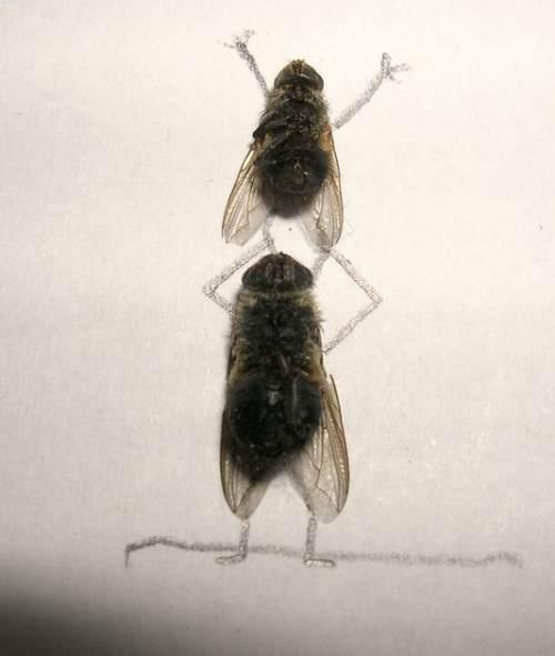 dead-flies-art-10