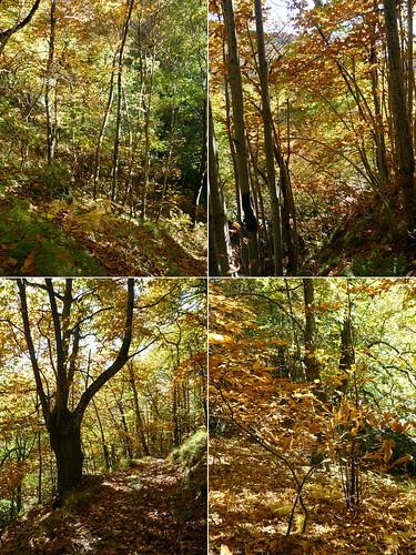 castagneto d'autunno