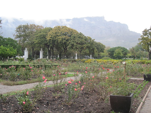 Roses in Company's Garden