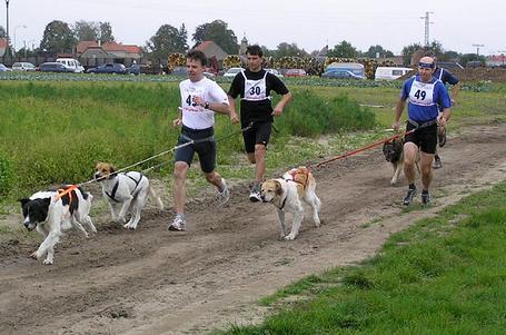 Behej se psem aneb závody v canicrossu