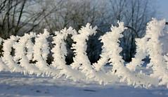 Icy Spiral (just.Luc) Tags: ice ijs glace cristals cristaux kristallen winter snow hiver neige schnee tree trees bomen spiraal spirale monochrome monochroom spiral guirlande festoon unintendedjewelry aumilieudelhiverjaidécouvertenmoiuninvincibleété árbol albero
