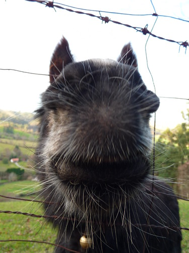 El día del burro