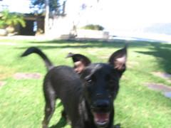 Coc com carrapichos (Luh Spiegel) Tags: angra cachorro viralata maaneta coc carrapicho