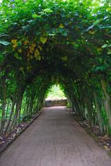 Light at the End of the Tunnel at Hidcote Manor Garden (antonychammond) Tags: uk trees england green britain path tunnel gloucestershire avenue hidcotemanorgarden inspiredbylove bej saveearth anawesomeshot flickraward firsttheearth theperfectphotographer simplysuperb goldstaraward absolutelystunningscapes pathscaminhos flickrsmasterpieces