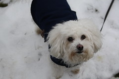 Portrait (Galina-Sea) Tags: winter dogs animals festival events places lakechelan fireandice
