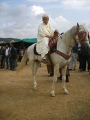fantazia a hannacha (m_bachir-   -) Tags: sport cheval algeria cavalier algerie medea equitation cheveaux fantazia chevalarabe waada hannacha
