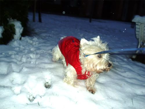 El perrón disfruta de la nieve