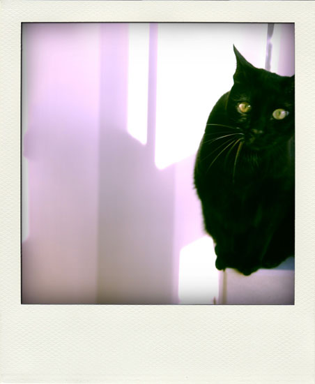 Poladroid 2