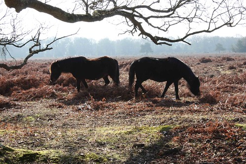 Week 9 - New Forest