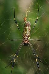 Big spider, and little spider