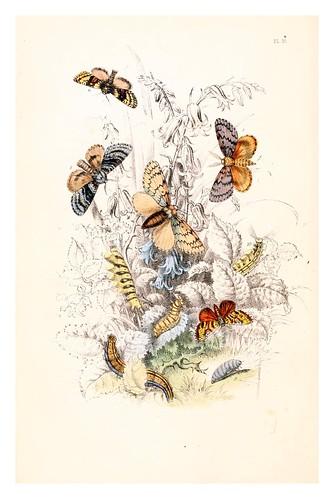 mariposa15