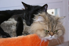 Tierna siesta (berlin 611) Tags: friends cats amigos cute sleep gatos friendly asleep dormir amistad tender tierna bestofspecialpetportraits