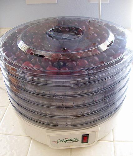 drying cherries 4