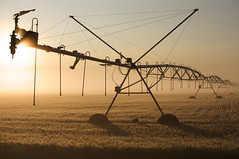 irrigation at dawn