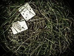     (ironicmoka - The catcher in the eye) Tags: stilllife grass bio conflict prato 2009 grotesque bosco naturamorta biologic distopia conflitto aciddreams grottesco chipiunehapiunemetta caducit fotografinewitaliangeneration acidmind   nicolaparoldo