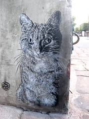 C215 - Paris (Vitry-sur-Seine) (C215) Tags: streetart art cat french graffiti stencil chat christian pochoir vitry masacara szablon c215 schablon 94400 gumy piantillas
