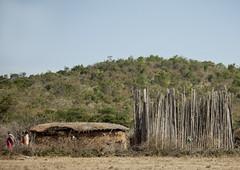 Cattle enclosure against the lions - Kenya (Eric Lafforgue) Tags: africa kenya culture tribal tribes afrika tradition tribe ethnic tribo afrique ethnology tribu eastafrica qunia 7866 lafforgue ethnie  qunia    kea    a
