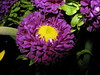 Do you work hard at being a better person?_2609 (jaciii (off&on)) Tags: flowers friends brown white black flower green yellow gold purple flashphotography indoorphotography indoorphoto magicofaworldinmacro goldsealofquality soocstraightoutofcamera elshowdelmacro theshowofthemacro flowerstoadmireangelamurphy shutterbugcafe betterthantheirbests soocforinterestedelitepurists sfcstraightfromcamera
