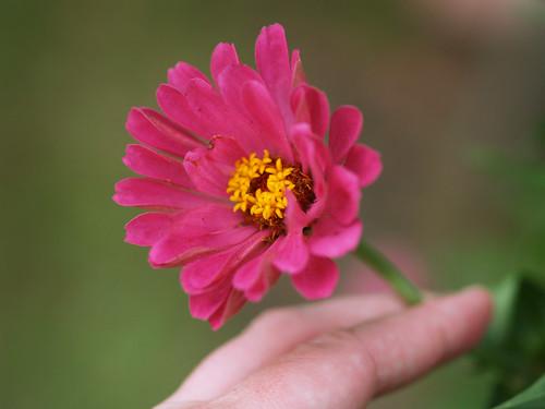 bouquet picking