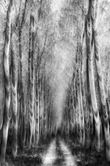 path 3 (nicola tramarin) Tags: wood alberi poplar strada italia grove path icm bosco foresta pioppi mosso veneto rovigo pioppeto blackwhitephotos polesine abigfave intentionalcameramovement nicolatramarin