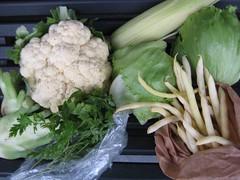 Aardvlo veggiebag week 37