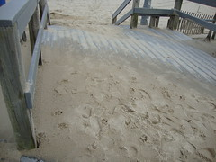 the boardwalk covered in sand