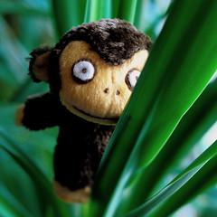 water your plants (ankakay) Tags: leaves toy monkey nikon soft houseplant adorable mini plush plushie nikkor yucca d80 tarogomi nikond80 sarurururu wateryourplants