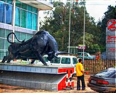 Run, dude, run! (Irene2005) Tags: africa sculpture 35mm bank bull ethiopia addisababa f20 primelens nikond90 texturebylesbrumes zemenbank runduderun