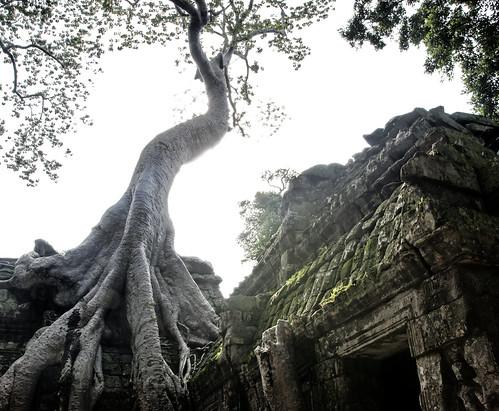 Angkor 30