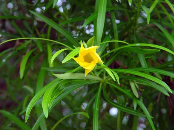 TreeFlower1.jpg