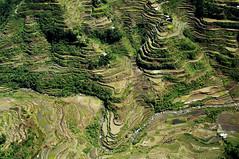 [フリー画像] 自然・風景, 田畑・農場, 棚田, フィリピン, 201009042300