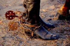 Cantadeiras (Eduardo Amorim) Tags: brazil horse southamerica leather brasil caballo cheval spur spurs sperone pferde cavalli cavallo cavalo gauchos pferd riograndedosul pampa hest hevonen campanha brsil gaucho  cuero amricadosul fronteira hst cuir gacho  amriquedusud  gachos  couro sudamrica esporas cuoio suramrica amricadelsur  sdamerika espora  pilchas espuelas  pilchasgauchas americadelsud santavitriadopalmar espuela  americameridionale eduardoamorim iayayam yamaiay