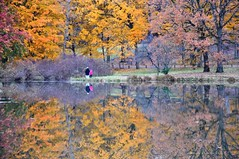 déjà vu (christiaan_25) Tags: morning pink autumn lake reflection tree fall water yellow gold bright beacon repeat familiar lakemarmo