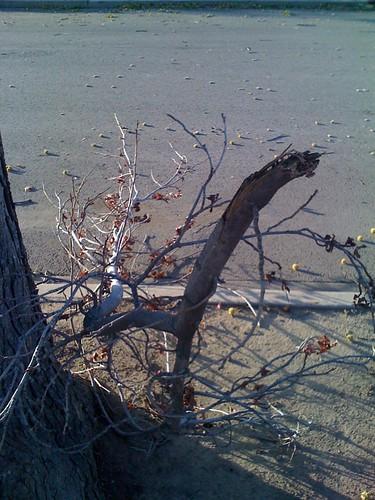 Tree limbs damaged by high winds