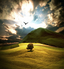 New Beginning (AIeksandra) Tags: landscape luoghimagici tree bird hope dramaticsky green meadow field clouds yellow revelation apocalyptic fairytale dreamland heaven solitude pasture freedom