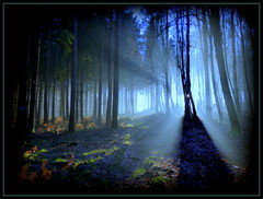 Montabaur - aliens landing (NPPhotographie) Tags: wood sun sunlight mist tree art nature fog evening sundown magic creative dust magical oberberg npp forst bestcapturesaoi elitegalleryaoi