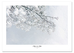 Neige (Imapix) Tags: winter snow tree photo photographie hiver neige whiteonwhite alemdagqualityonlyclub vosplusbellesphotos neigesurneige imapixphotography gatanbourquephotography