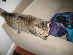 IMG_1750 (fadingembers) Tags: animals stormy kitties bigpurplehouse