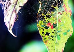 falling (xeno(x)) Tags: blue red color macro green nature canon garden leaf zen 2008 xeno 40d aplusphoto asiaart