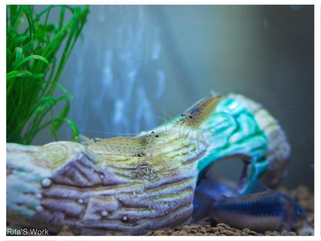 aquarium syami 4