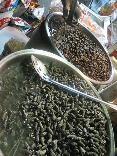 Larvae - Korean Delicacy